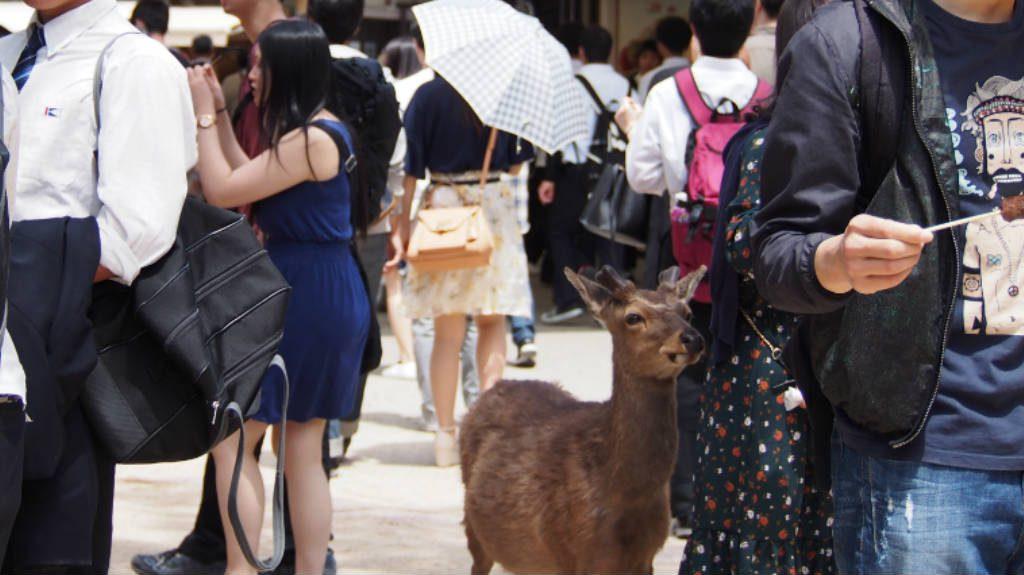 宮島の鹿@商店街