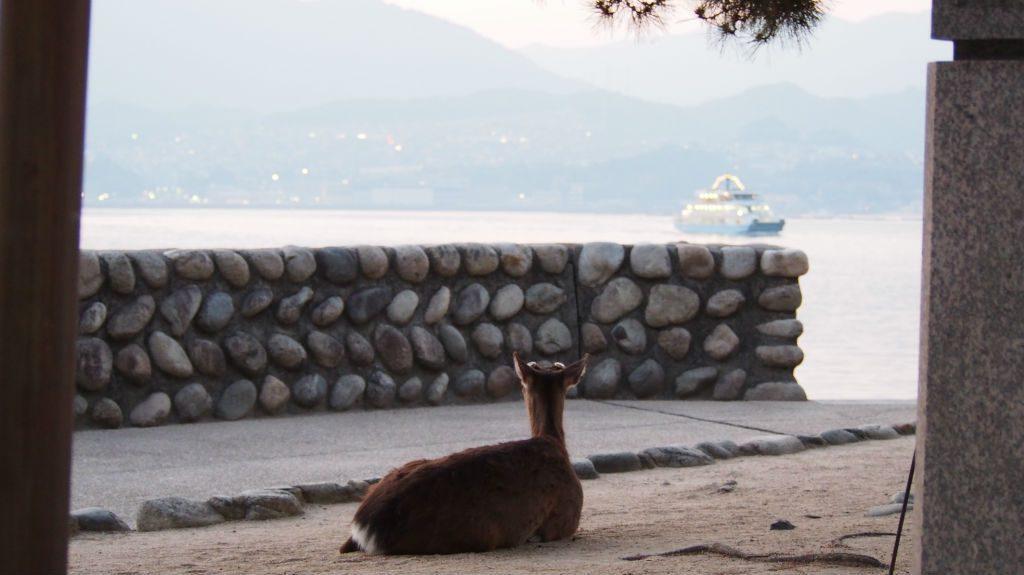 宮島から本州を眺める鹿